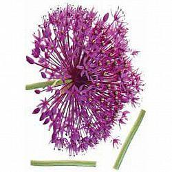 Nálepka Dekorační 46367 Kds 50x70 Onion Flower