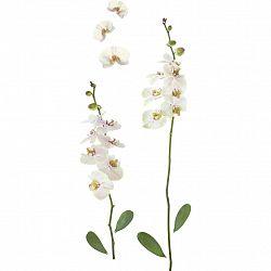 Nálepka Dekorační Orchidea