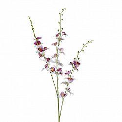 Orchidej 3018125mm-81