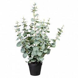 Umělá Rostlina Eukalyptus, 60cm