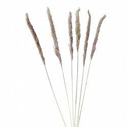 Umělá Rostlina Pampasgrass, V: 85cm